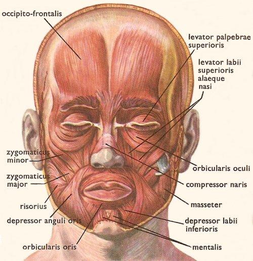Work Your Facial Muscles! - Porcelain