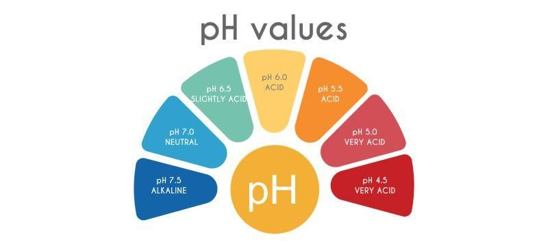 Ph Balance Why Is It Important Skinhacks By Porcelain Prologue